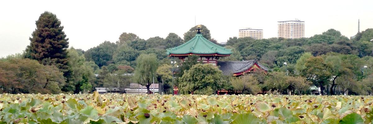 上野に来られた企業様の、社員の方々の健康を見守ります。